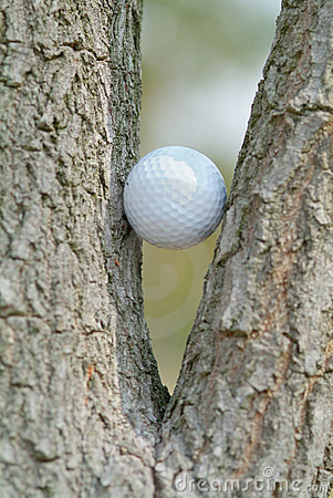 Golf ball in a tree