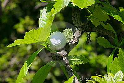 Golf ball tree