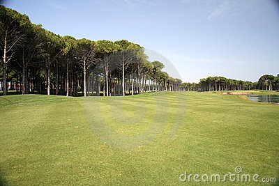 Golf club, green grass