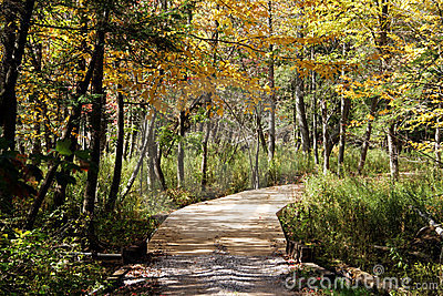 Golf Course Cart Path in Fall