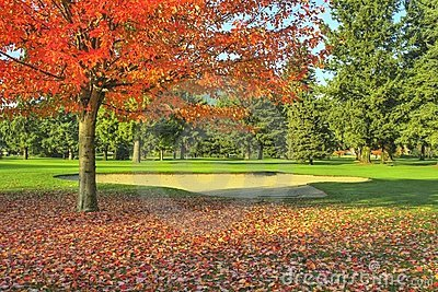 Golf Course Fall Autumn