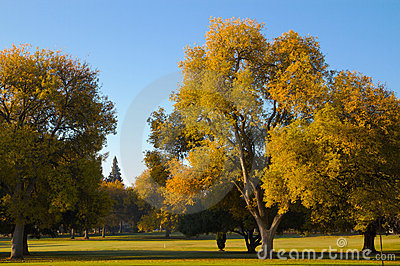 Golf Course Fall Elm Trees