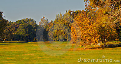 Golf Course  Greens Two gold leaf trees