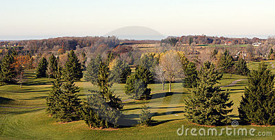 Golf course in pine trees