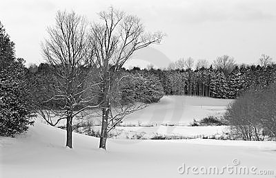 Golf Course in Winter