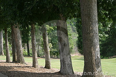 Golf Fairway Tree Lined