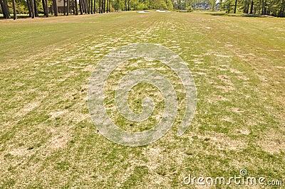 Golf Lawn