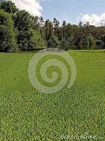 Golfbanan med laken beskådar