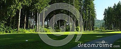 Golfing Golf Fairway Trees Path