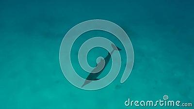 Golfinho do girador com bebê vídeos de arquivo
