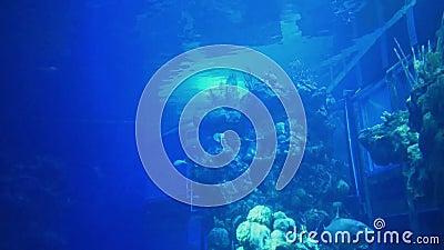 Golfinho e peixes nos mares com Nemo e atra??o dos amigos em Epcot na ?rea de Walt Disney World Resort vídeos de arquivo