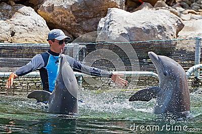 Golfinhos do treinamento do homem no parque da água Foto de Stock Editorial