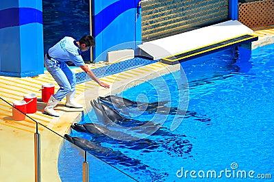 Golfinhos e o instrutor Imagem Editorial