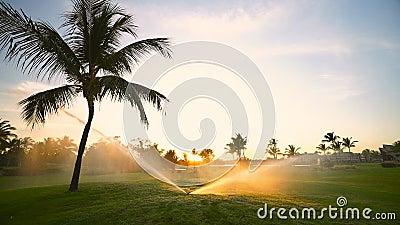 Golfplatzberieselungsanlage auf Fahrrinne w?hrend des goldenen Sonnenuntergangs stock video