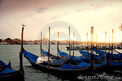 Gondola Boats in Venice, gull watching