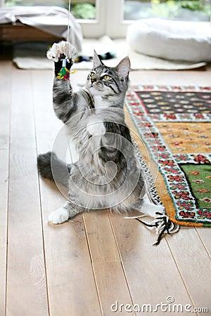 Gonna catch it!