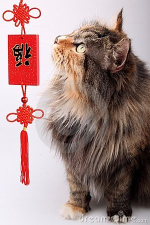 Good fortune cat.