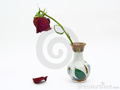 Goodbye my love. Dying rose.