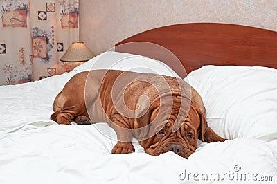 Goodnight Dog