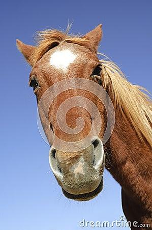 Goofy horse head