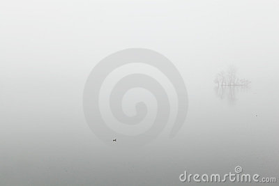 Goose in the fog