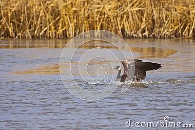Goose Landing