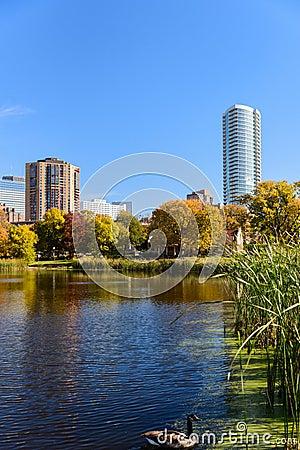 Free Goose On The Lake At Loring Park, Minneapolis, Minnesota Royalty Free Stock Photo - 48625555