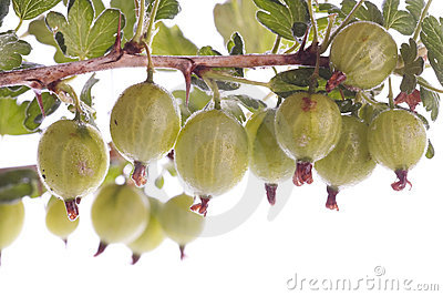 Gooseberries over white