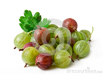 Gooseberry fruit closeup