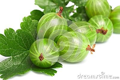 Gooseberry,  among green leaves