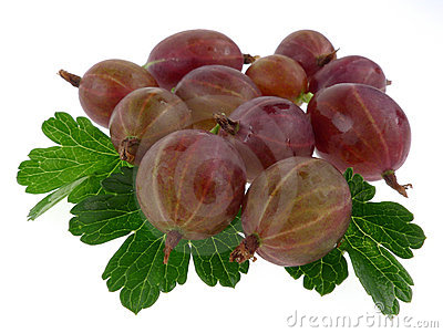 Gooseberry isolated with leaves