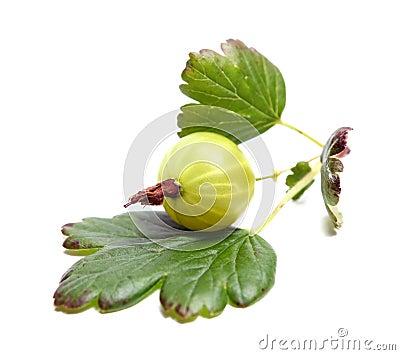 Goosenberry