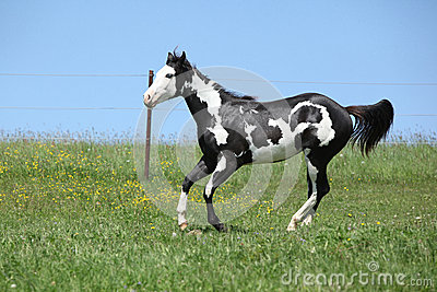 Pin White Horse Running In Water Hd Desktop Wallpaper High