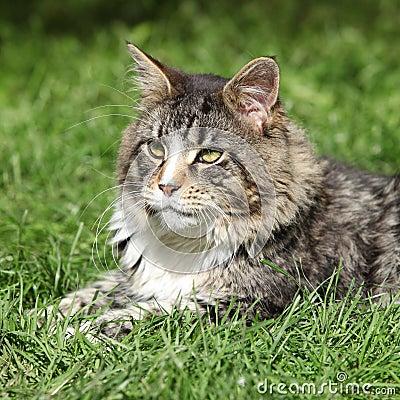 Gorgeous cat lying