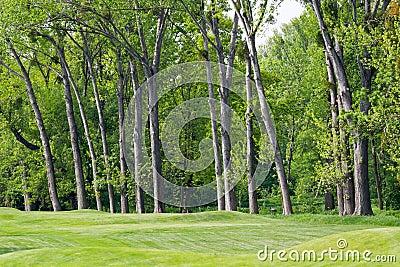 Gorgeous golf green
