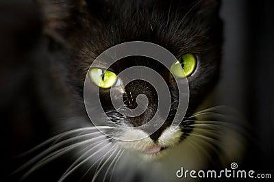 Gorgeous green cat eyes