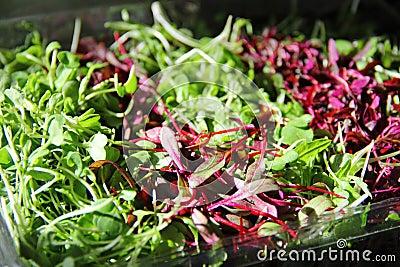 Gorgeous Microgreens