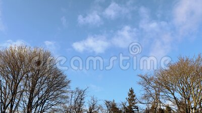 Gorgeous view of  tree top on blue sky with white clouds background. Beautiful spring nature backgrounds.  stock footage
