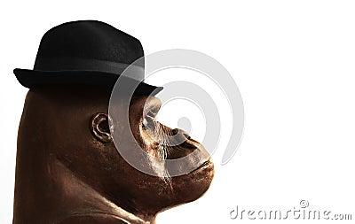 Gorilla in hat