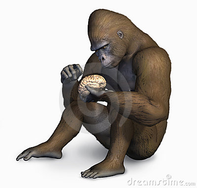 Free Gorilla Inspecting Human Brain - With Clipping Path Stock Image - 499401