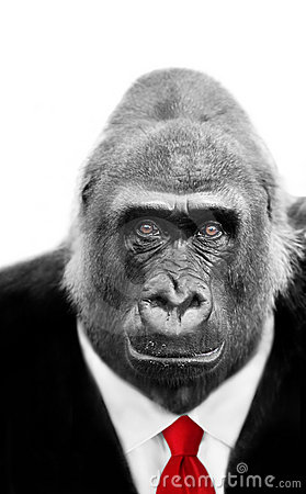 gorilla in suit and tie stock image image 12594811