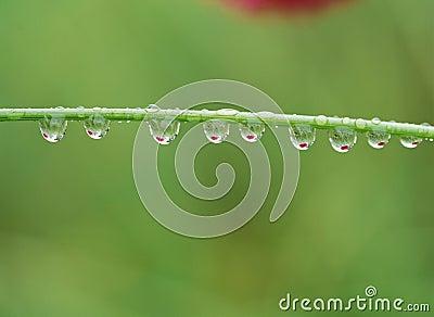 Gota del agua
