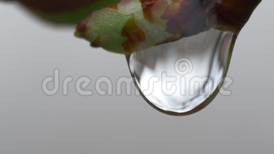 Gota Vdeo macro da chuva vídeos de arquivo