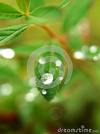 Gotas de rocío en las hojas