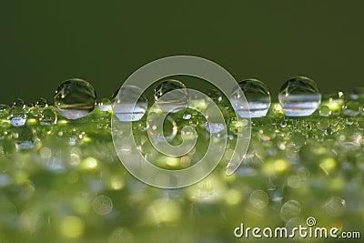 Gotitas en la lámina de la hierba - macro del rocío