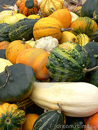 Free Gourds, Pumpkins And Squashes Stock Images - 308764