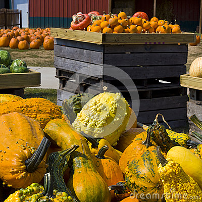 Gourds, Pumpkins and Squashes on fermers market