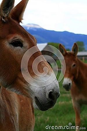 Government Mule