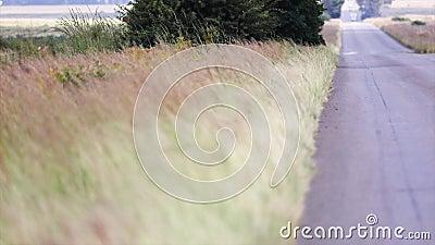 Gräs bredvid den långa vägen som blåser i vinden arkivfilmer