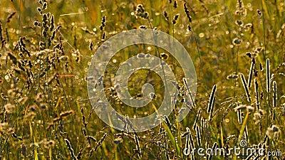 Gräs med dagg och spindel på en webbsida lager videofilmer